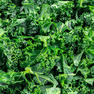 One of the most popular foods among healthy eaters nowadays is kale. Kale is a leafy cruciferous vegetable that has a high nutritional value.