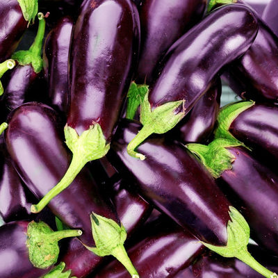 The eggplant, otherwise known as aubergine or brinjal, is a plant from the Nightshade family.