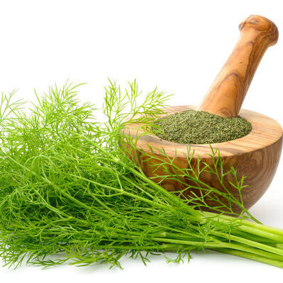 Dill is an herbal plant which has leaves and seeds that are used as a seasoning or spice.