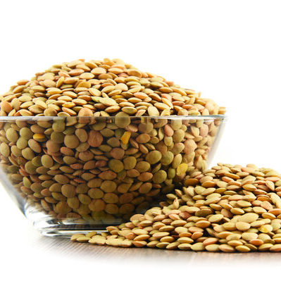 Lentils (Lens culinaris) are a crop belonging to the Fabaceae legume family.