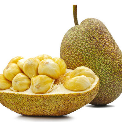 Jackfruits are a species of the fig, mulberry, and breadfruit family and grow on the jack tree.