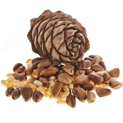 Pine nuts (Pinus gerardiana) are edible seeds from pinyon pine trees.